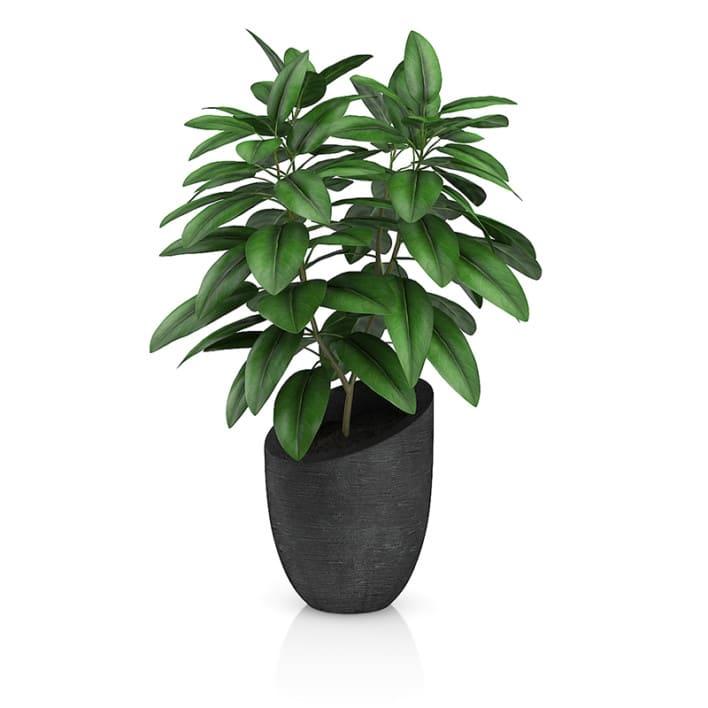 Plant in Black Pot