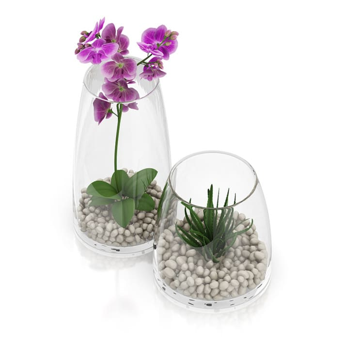 Orchid Flower in Glass Pot
