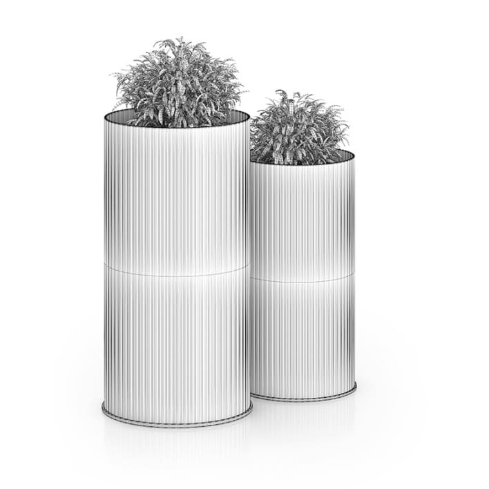 Two Plants in Large Pots