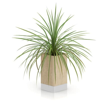 Small Plant in Wooden Pot