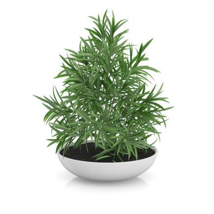 Plant in Flat Pot