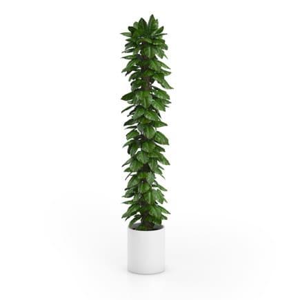 Tall Climbing Plant