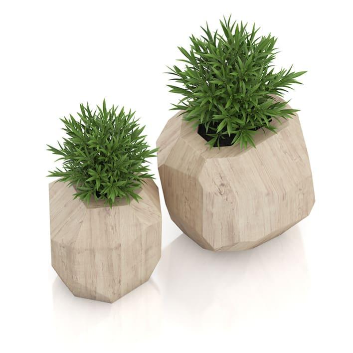 Two Plants in Modern Wooden Pots