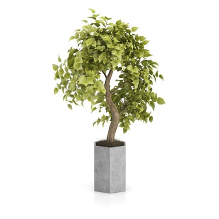 Bonsai Tree in Grey Pot