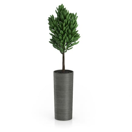 Plant in Dark Ceramic Pot