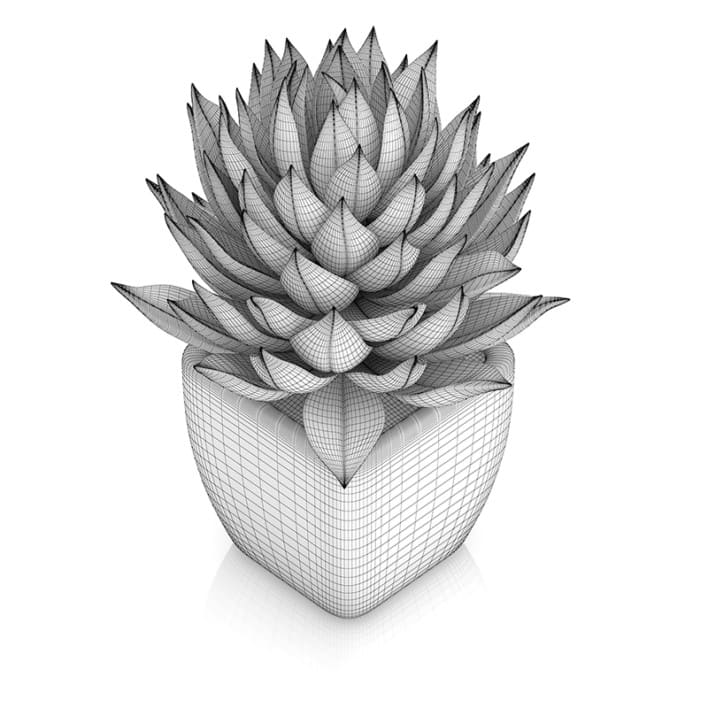 Small Plant in White Pot 1