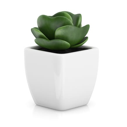 Small Plant in White Pot 2