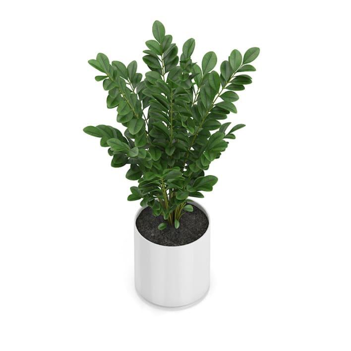 Plant in Round Pot