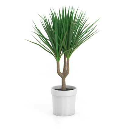 Palm Tree in Round Pot 2