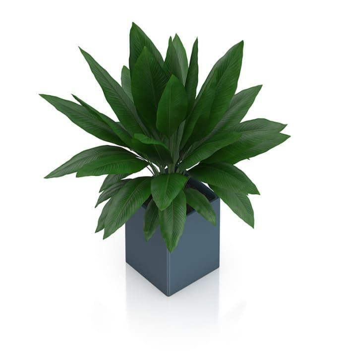 Plant in Square Blue Pot
