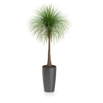 Palm Tree in Round Pot 3