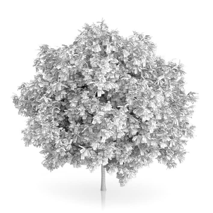 Rowan Tree (Sorbus aucuparia) 3m