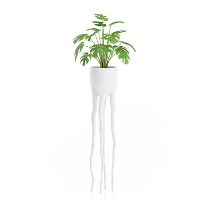 Monsteria Plant in Tall Pot