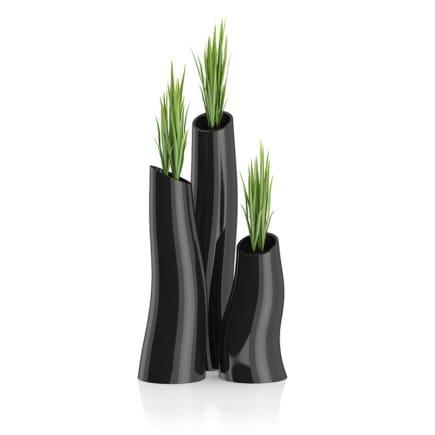 Three Plants in Black Pots