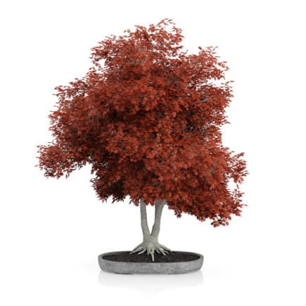 Red Bonsai Tree