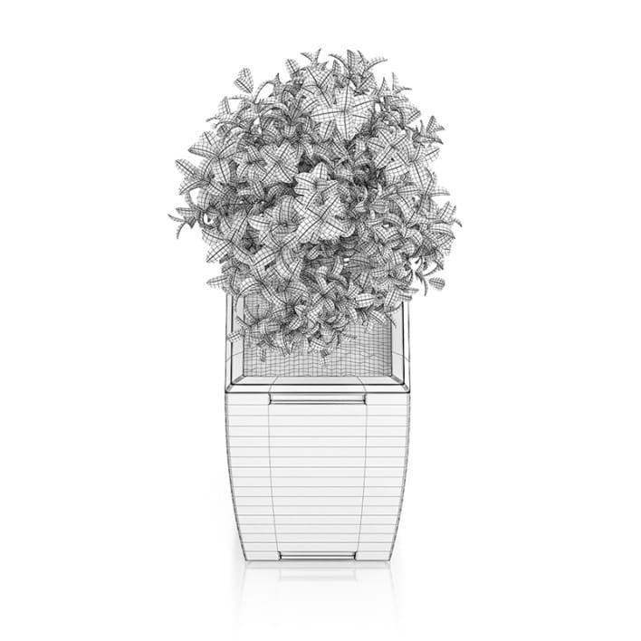 Plant in Rectangular Pot