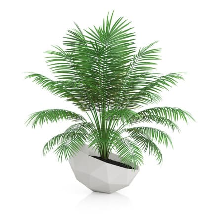 Palm Tree in Modern Pot