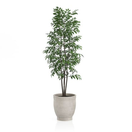 Small Tree in Stone Pot
