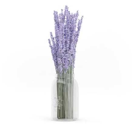 3d Purple Lupine in a Jar