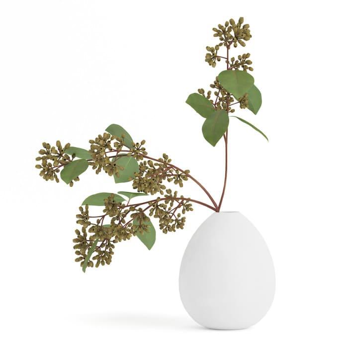 3d Sugar Gum Twigs in White Vase