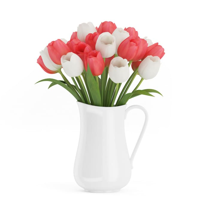 3d Red and White Tulips