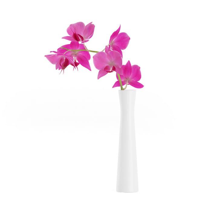 3d Orchid Flower in White Vase