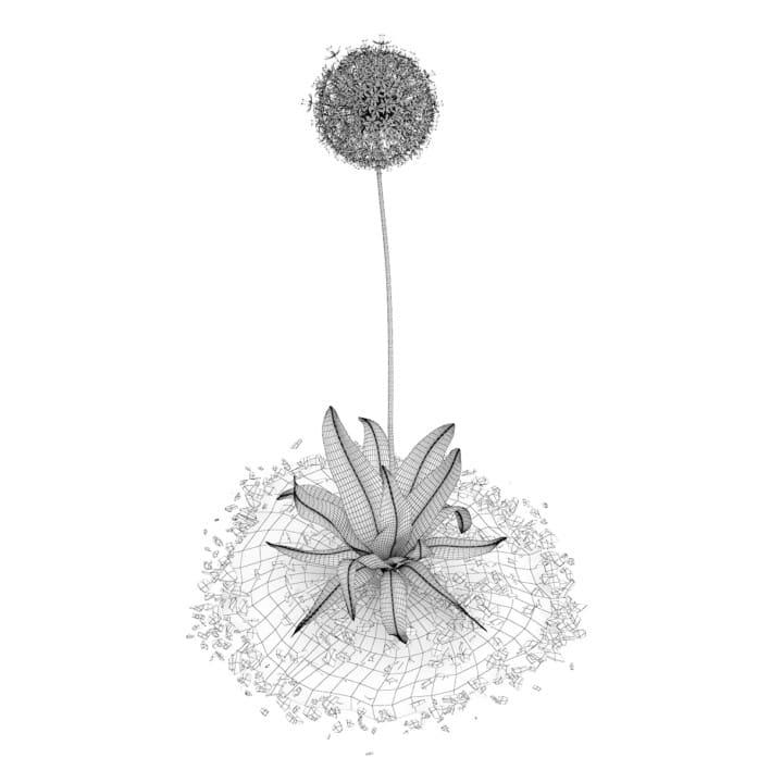 3d Allium Plant