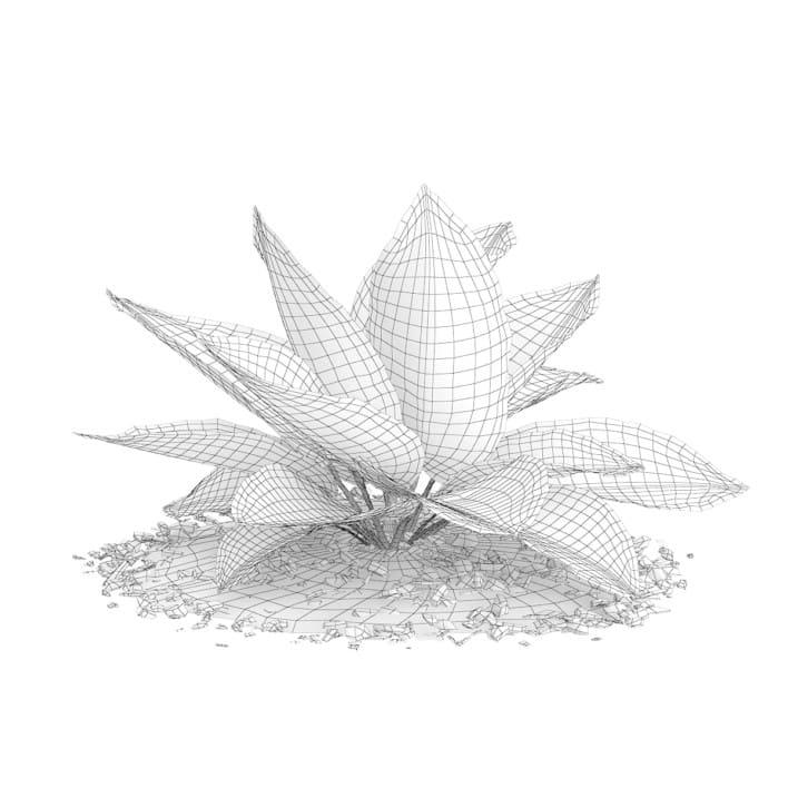 3d Hosta Plant