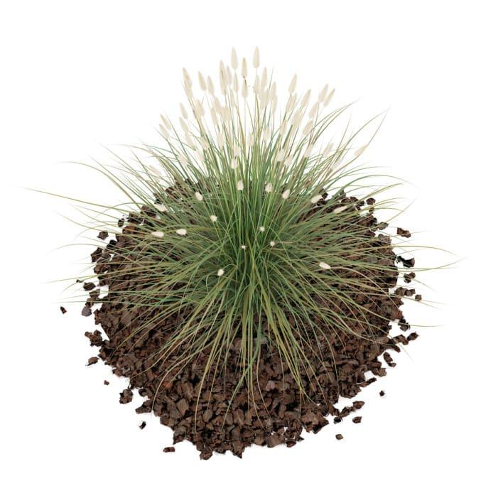3d Ornamental Grass