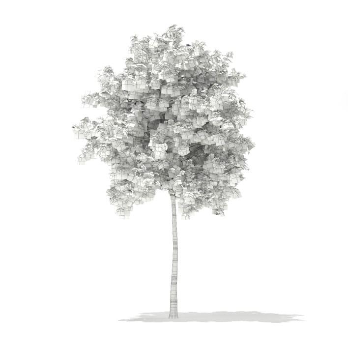 3d Silver Birch