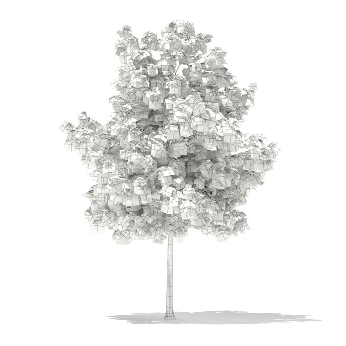 3d Sweetgum Tree