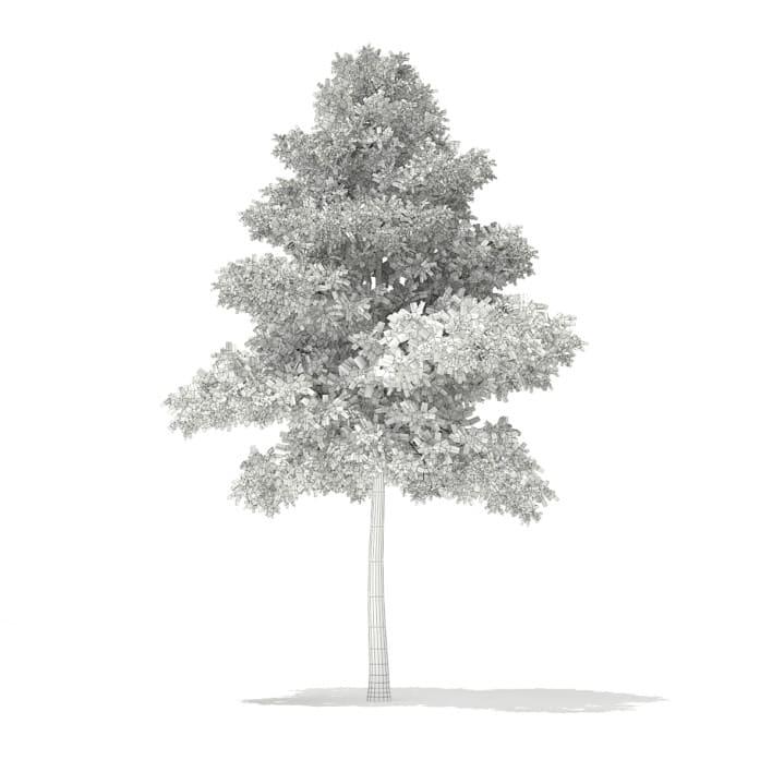 3d Scots Pine Tree