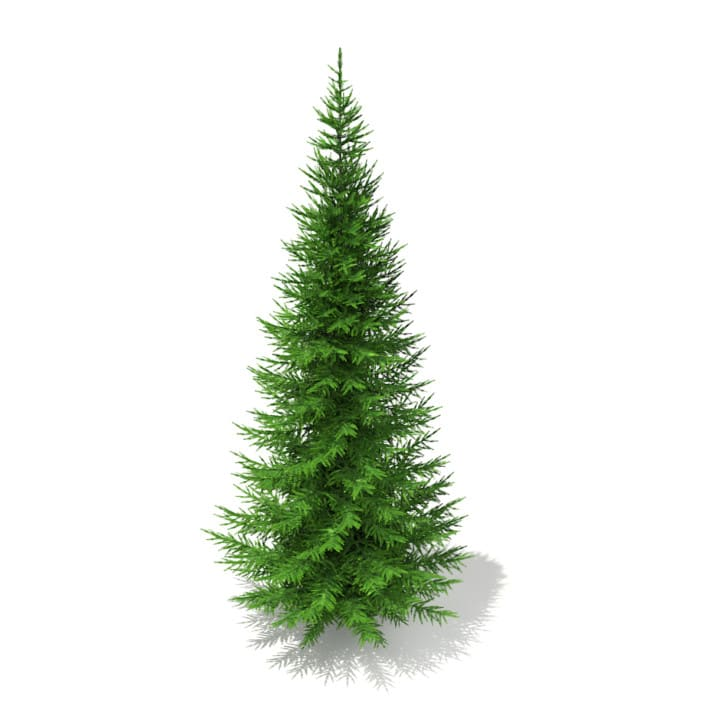 3d Norway Spruce