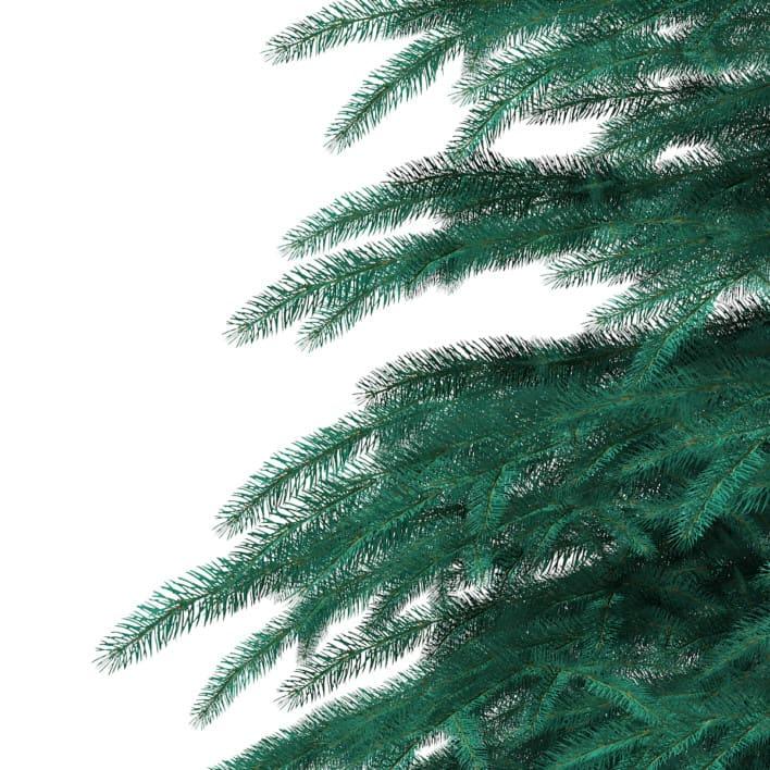 3d Blue Spruce