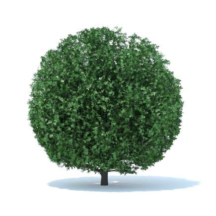 Spherical Shrub 3D Model