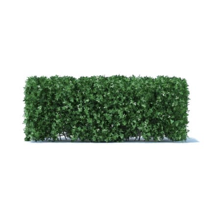 Straight Hedge 3D Model