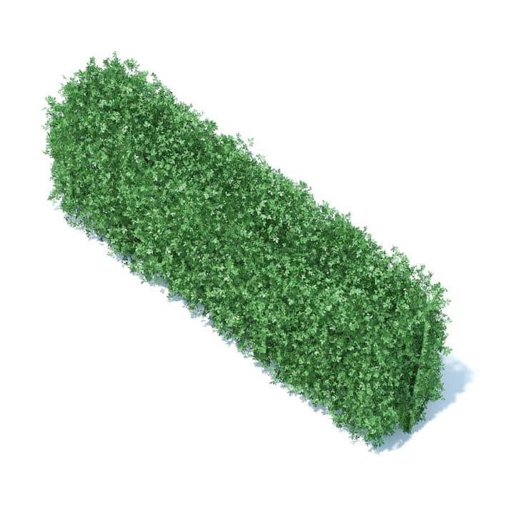 Straight Hedge 3D Model
