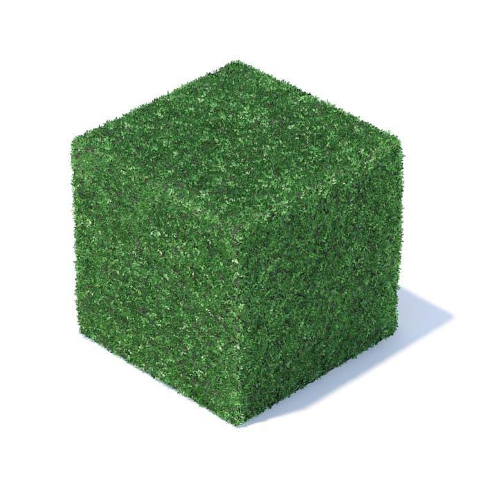 Cube Shaped Hedge 3D Model