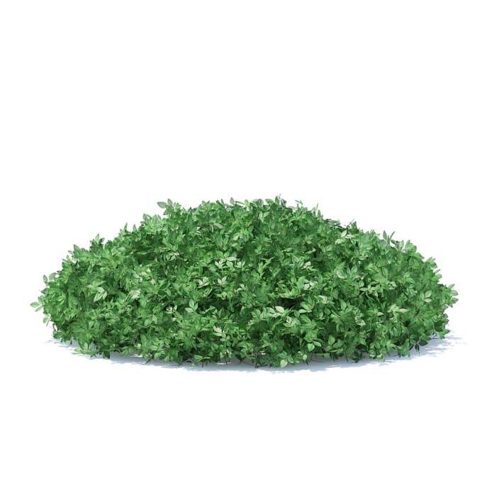 Short Round Hedge 3D Model