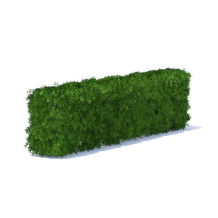 Straight Thuja Hedge 3D Model