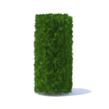 Cylindrical Thuja Hedge 3D Model