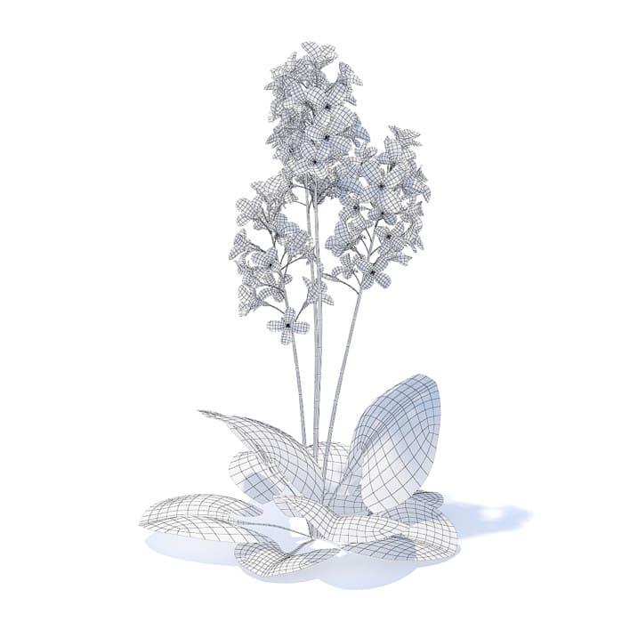 Scurvy-grass 3D Model