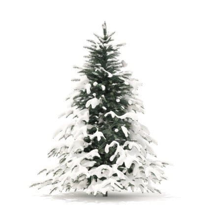 Spruce Tree with Snow 3D Model