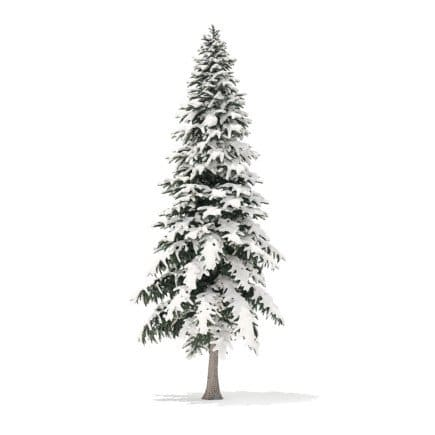 Spruce Tree with Snow 3D Model 6.4m