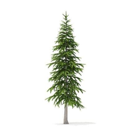 Fir Tree 3D Model 3.4m