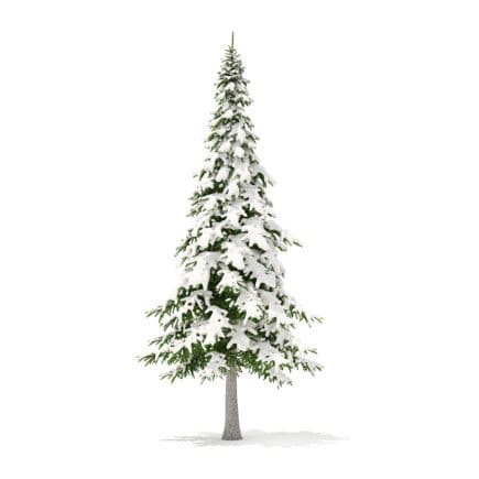 Fir Tree with Snow 3D Model 7m
