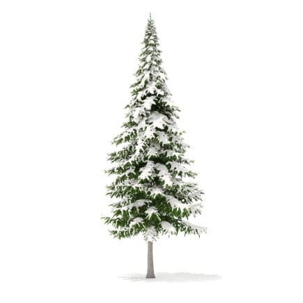 Fir Tree with Snow 3D Model 10m