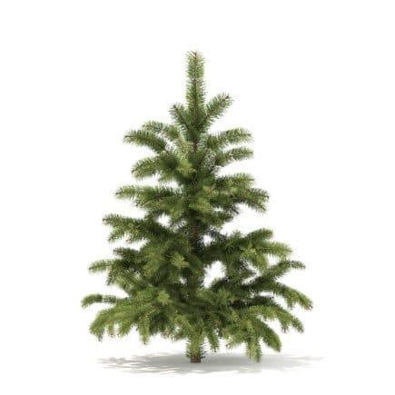 Pine Tree 3D Model 1.4m