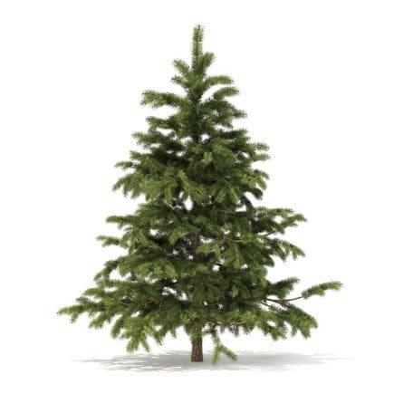 Pine Tree 3D Model 2.3m
