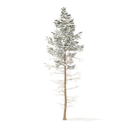Pine Tree with Snow 3D Model 16m